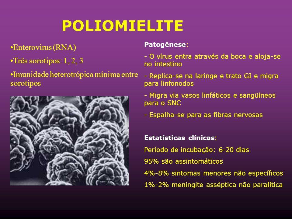 POLIOMIELITE Patogênese: - O vírus entra através da boca e aloja-se no intestino - Replica-se na laringe e trato GI e migra para linfonodos - Migra via vasos linfáticos e sangüíneos para o SNC - Espalha-se para as fibras nervosas Estatísticas clínicas: Período de incubação: 6-20 dias 95% são assintomáticos 4%-8% sintomas menores não específicos 1%-2% meningite asséptica não paralítica Enterovirus (RNA) Três sorotipos: 1, 2, 3 Imunidade heterotrópica mínima entre sorotipos