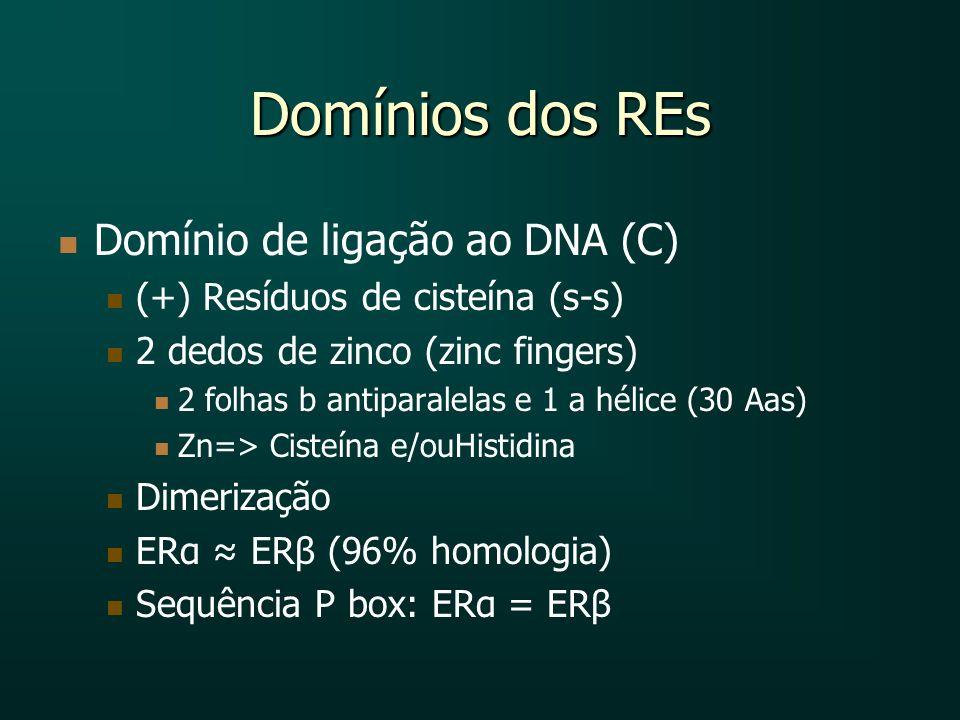 Domínios dos REs Domínio de ligação ao DNA (C) (+) Resíduos de cisteína (s-s) 2 dedos de zinco (zinc fingers) 2 folhas b antiparalelas e 1 a hélice (3