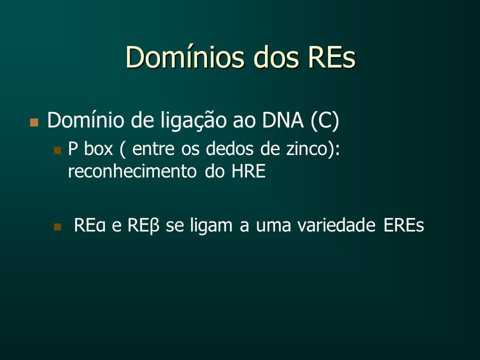 Domínios dos REs Domínio de ligação ao DNA (C) P box ( entre os dedos de zinco): reconhecimento do HRE REα e REβ se ligam a uma variedade EREs