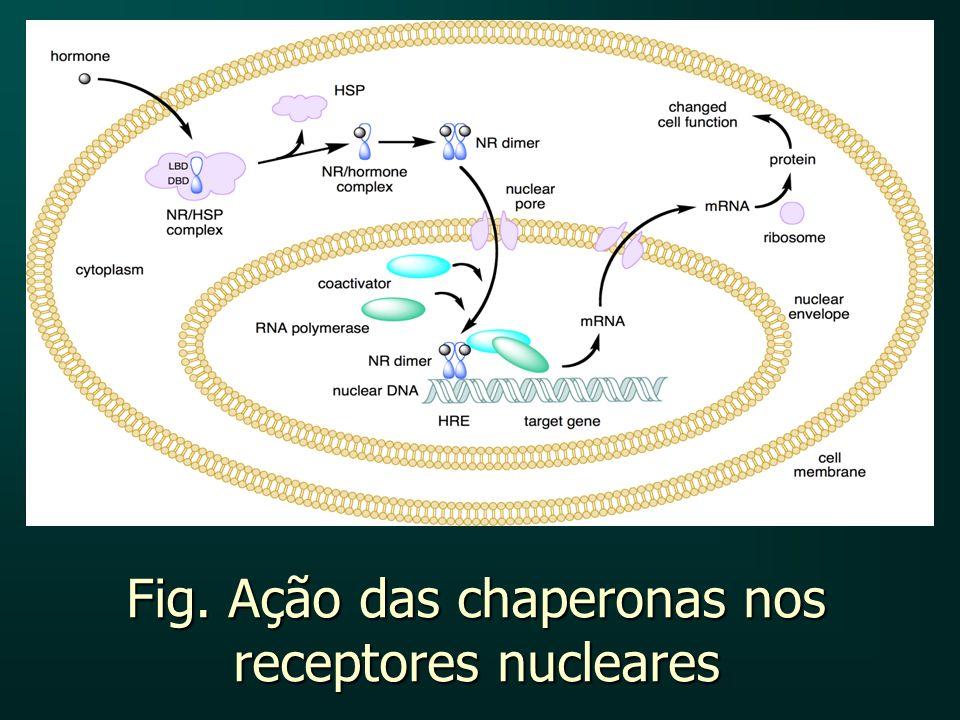 Fig. Ação das chaperonas nos receptores nucleares