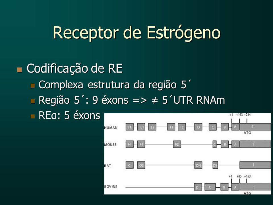 Receptor de Estrógeno Codificação de RE Codificação de RE Complexa estrutura da região 5´ Complexa estrutura da região 5´ Região 5´: 9 éxons => 5´UTR