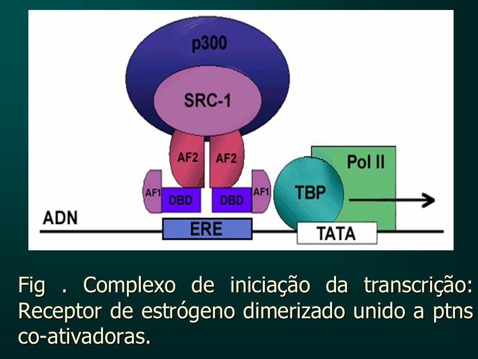 Fig. Complexo de iniciação da transcrição: Receptor de estrógeno dimerizado unido a ptns co-ativadoras.