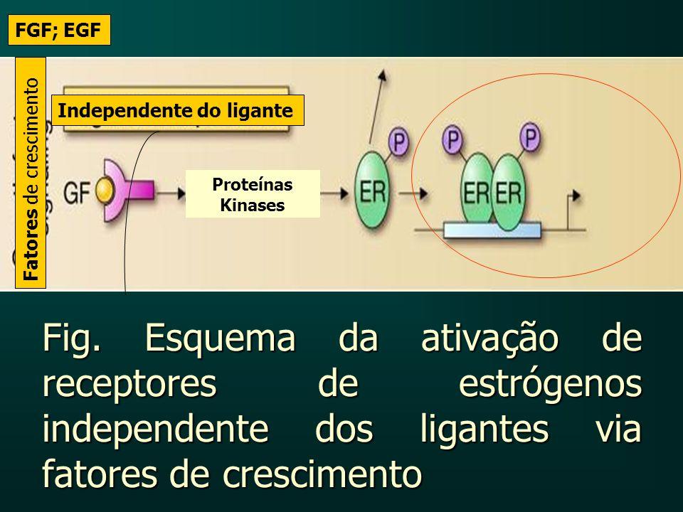 Fig. Esquema da ativação de receptores de estrógenos independente dos ligantes via fatores de crescimento Fatores de crescimento Independente do ligan