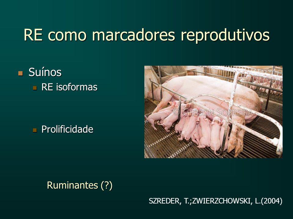 RE como marcadores reprodutivos Suínos Suínos RE isoformas RE isoformas Prolificidade Prolificidade Ruminantes (?) SZREDER, T.;ZWIERZCHOWSKI, L.(2004)