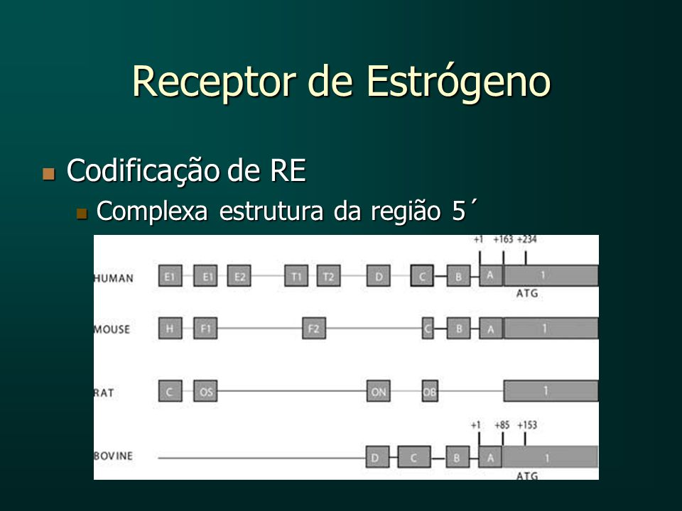 Receptor de Estrógeno Codificação de RE Codificação de RE Complexa estrutura da região 5´ Complexa estrutura da região 5´