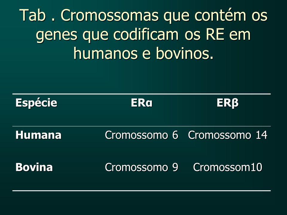 Tab. Cromossomas que contém os genes que codificam os RE em humanos e bovinos. Espécie ERα ERβ Humana Cromossomo 6 Cromossomo 14 Bovina Cromossomo 9 C