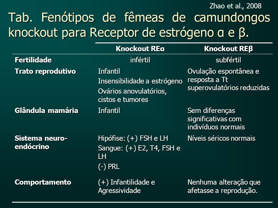 Tab. Fenótipos de fêmeas de camundongos knockout para Receptor de estrógeno α e β. Knockout REα Knockout REβ Fertilidadeinfértilsubfértil Trato reprod