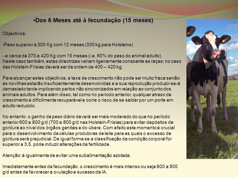 Dos 6 Meses até à fecundação (15 meses) Objectivos: -Peso superior a 300 Kg com 12 meses (330 kg para Holsteins) - e cerca de 370 a 420 Kg com 15 mese