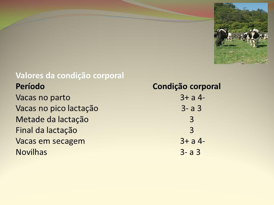 Valores da condição corporal Período Condição corporal Vacas no parto 3+ a 4- Vacas no pico lactação 3- a 3 Metade da lactação 3 Final da lactação 3 V