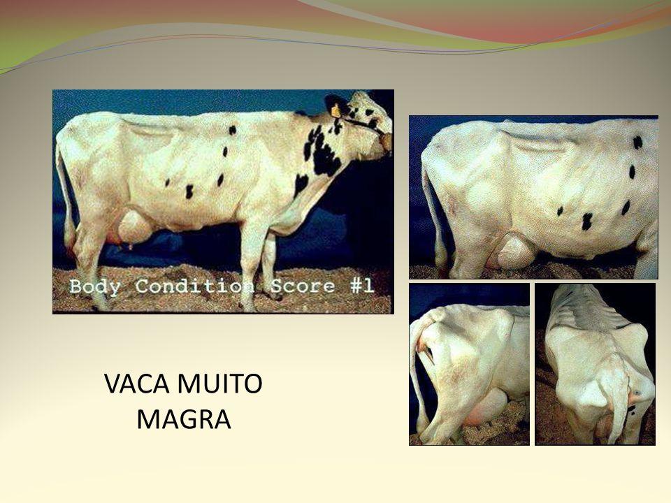 VACA MUITO MAGRA