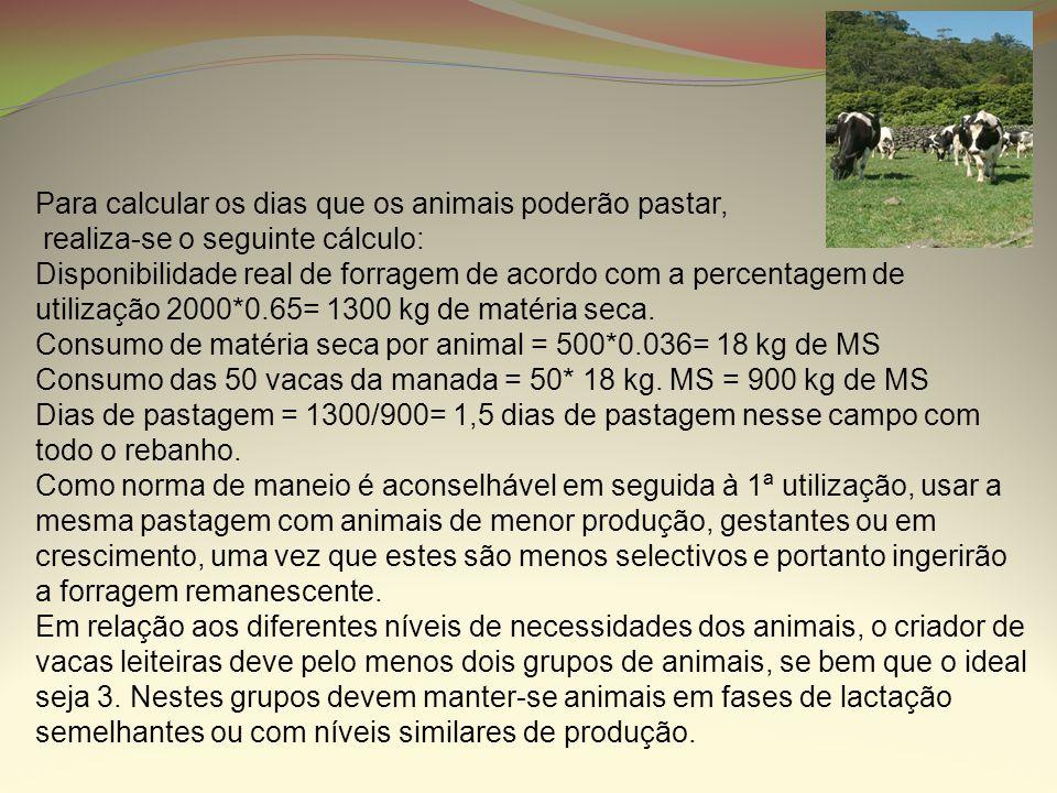 Para calcular os dias que os animais poderão pastar, realiza-se o seguinte cálculo: Disponibilidade real de forragem de acordo com a percentagem de ut
