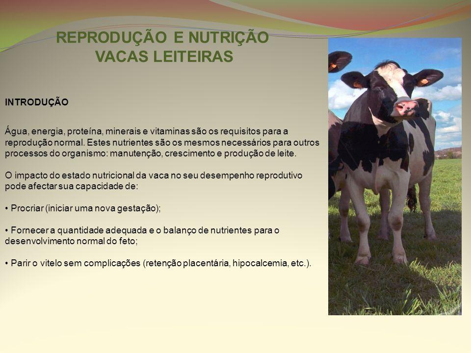 REPRODUÇÃO E NUTRIÇÃO VACAS LEITEIRAS INTRODUÇÃO Água, energia, proteína, minerais e vitaminas são os requisitos para a reprodução normal. Estes nutri