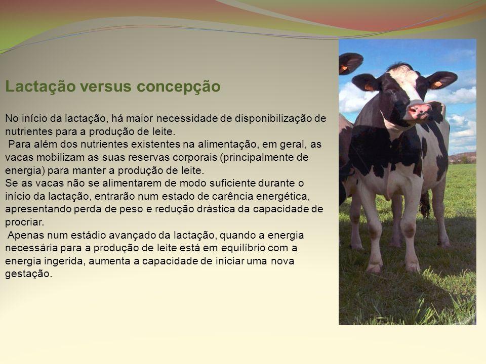 Lactação versus concepção No início da lactação, há maior necessidade de disponibilização de nutrientes para a produção de leite. Para além dos nutrie