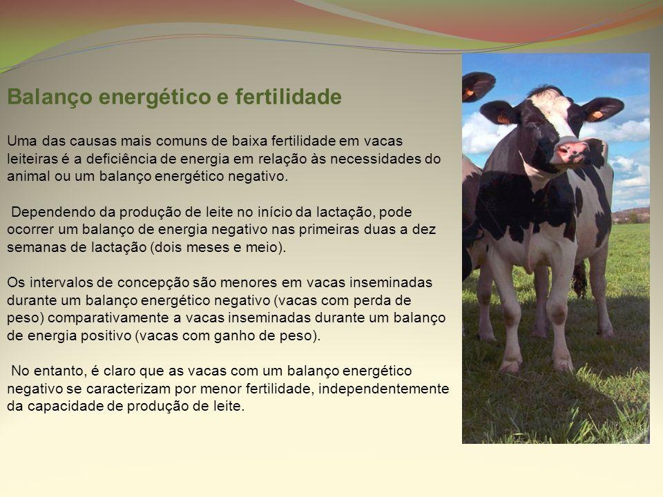 Balanço energético e fertilidade Uma das causas mais comuns de baixa fertilidade em vacas leiteiras é a deficiência de energia em relação às necessida