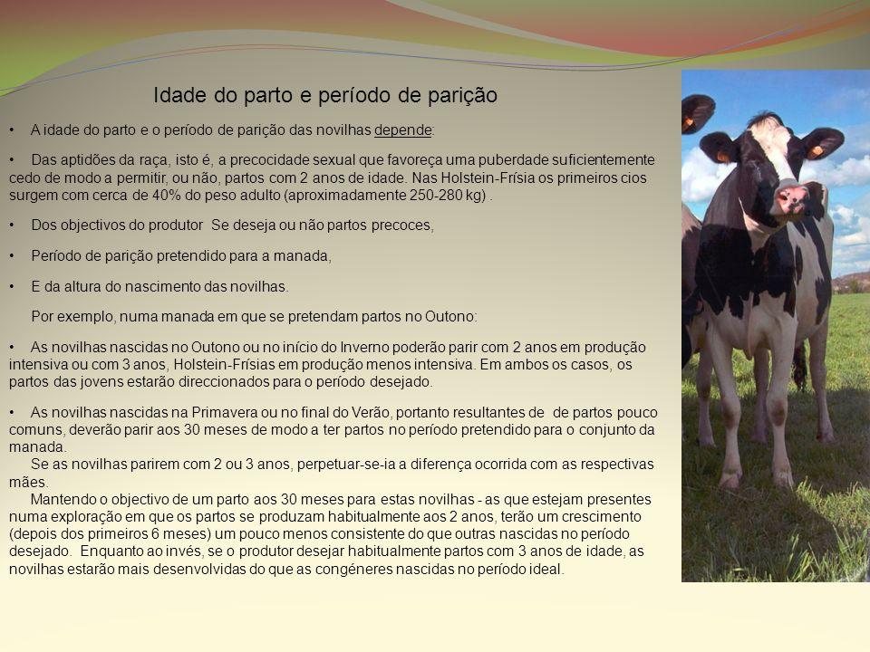 Como atrás foi referido o 1º terço é o período mais exigente em termos da alimentação da vaca leiteira, e a fase que requer maior esforço por parte do criador para suprir as necessidades nutricionais dos animais.