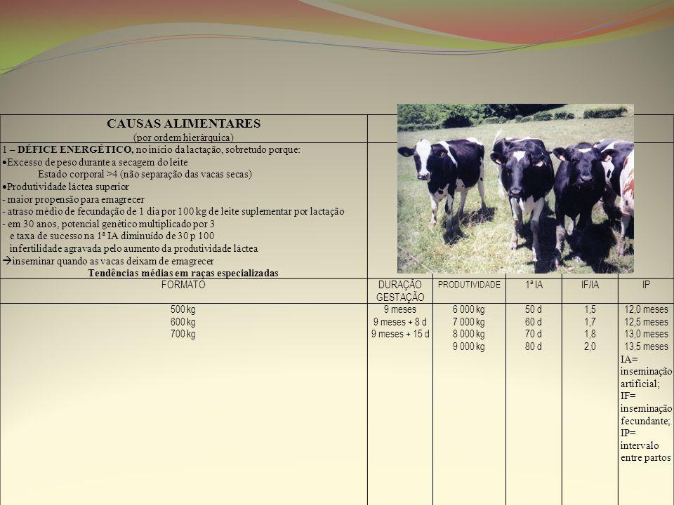 CAUSAS ALIMENTARES (por ordem hierárquica) 1 – DÉFICE ENERGÉTICO, no início da lactação, sobretudo porque: Excesso de peso durante a secagem do leite