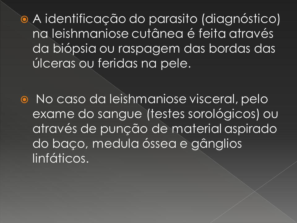 A identificação do parasito (diagnóstico) na leishmaniose cutânea é feita através da biópsia ou raspagem das bordas das úlceras ou feridas na pele. No