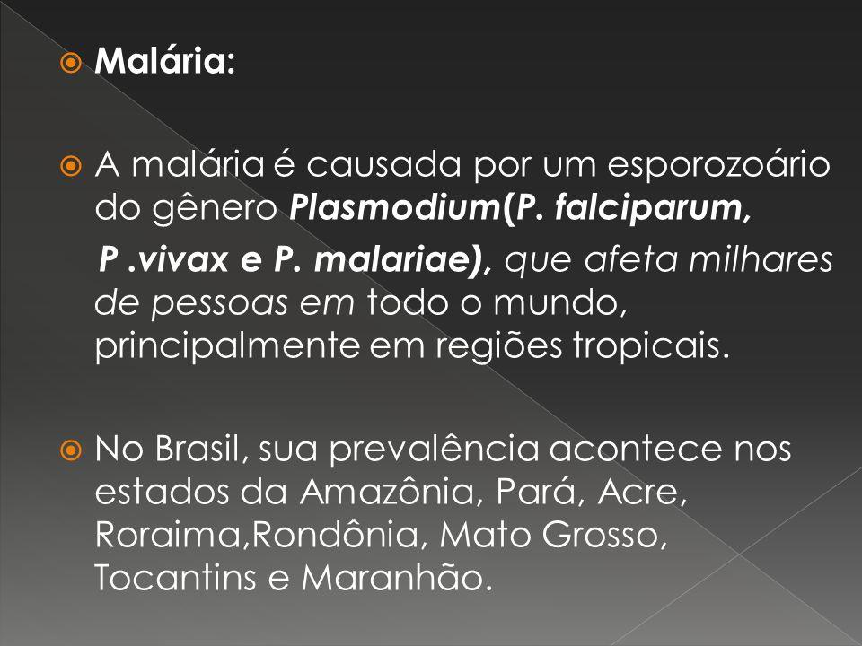 Malária: A malária é causada por um esporozoário do gênero Plasmodium ( P. falciparum, P.vivax e P. malariae), que afeta milhares de pessoas em todo o