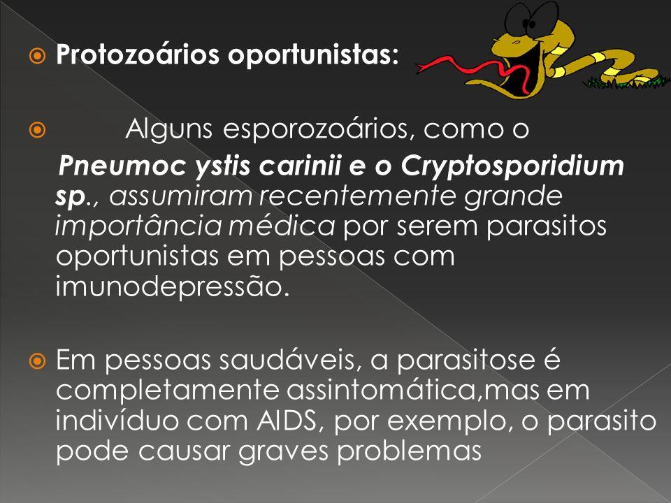 Protozoários oportunistas: Alguns esporozoários, como o Pneumoc ystis carinii e o Cryptosporidium sp., assumiram recentemente grande importância médic