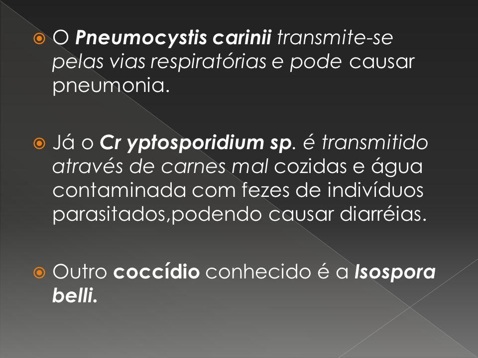O Pneumocystis carinii transmite-se pelas vias respiratórias e pode causar pneumonia. Já o Cr yptosporidium sp. é transmitido através de carnes mal co
