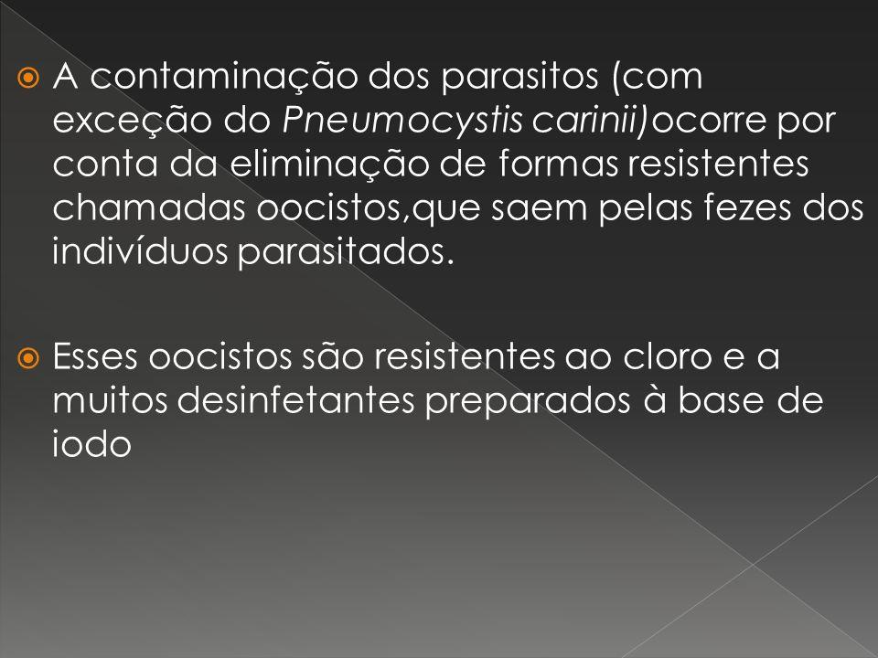 A contaminação dos parasitos (com exceção do Pneumocystis carinii)ocorre por conta da eliminação de formas resistentes chamadas oocistos,que saem pela