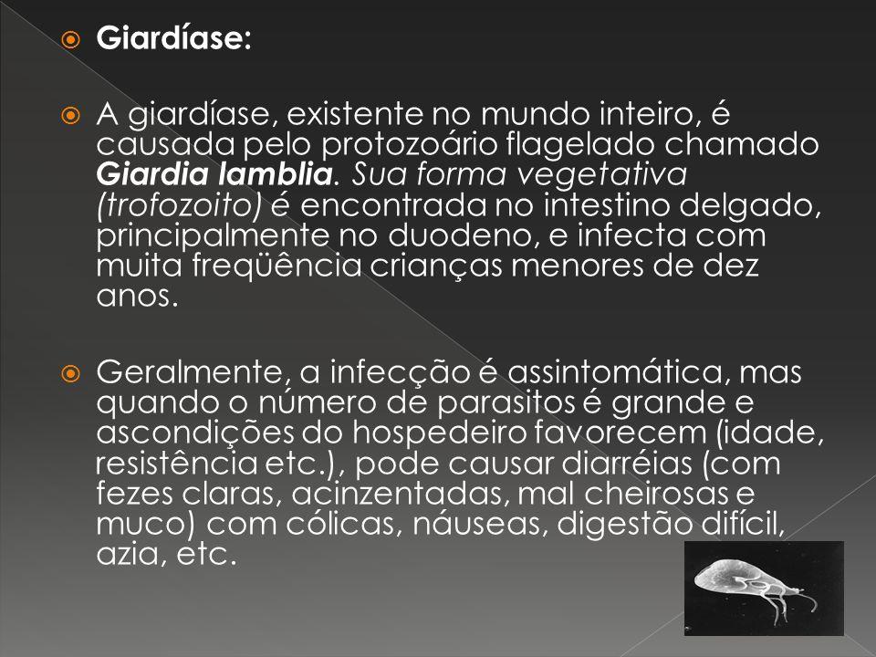 Giardíase: A giardíase, existente no mundo inteiro, é causada pelo protozoário flagelado chamado Giardia lamblia. Sua forma vegetativa (trofozoito) é