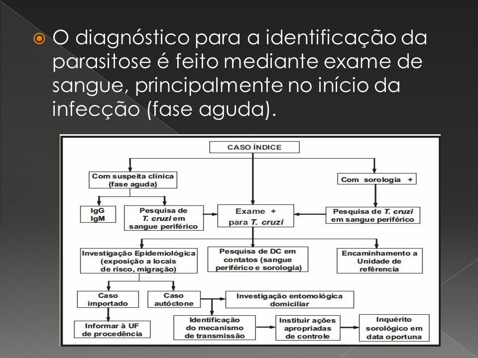 O diagnóstico para a identificação da parasitose é feito mediante exame de sangue, principalmente no início da infecção (fase aguda).