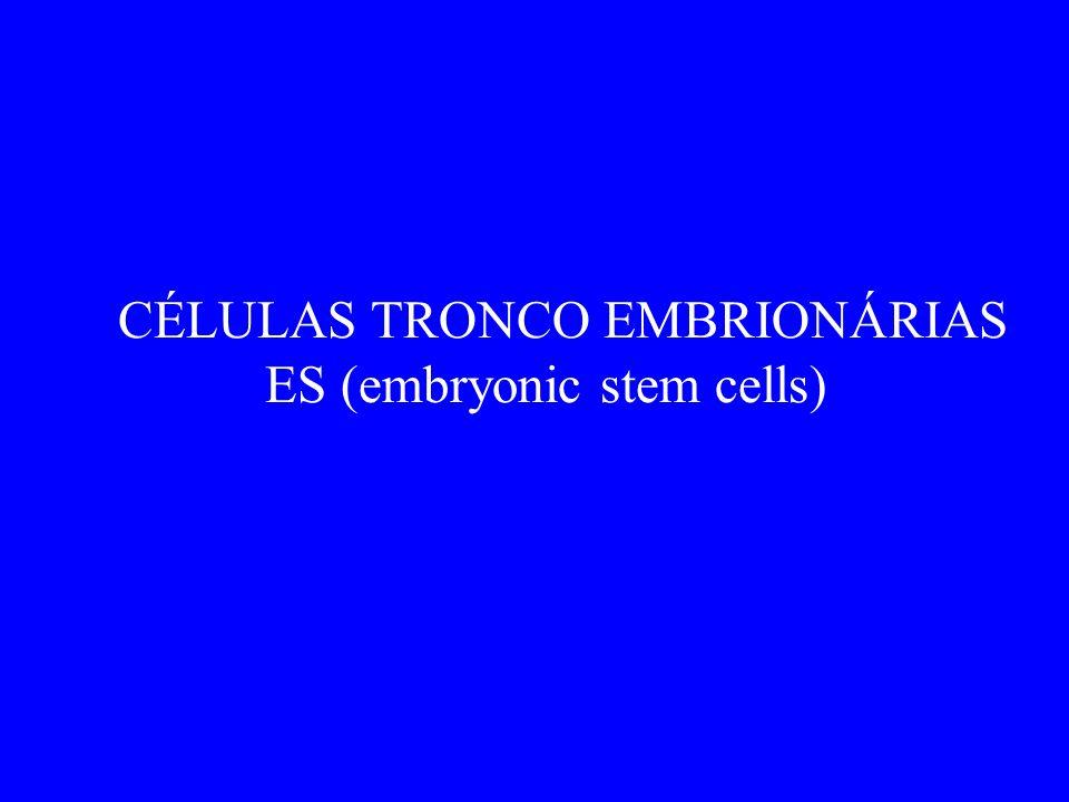 CÉLULAS TRONCO EMBRIONÁRIAS ES (embryonic stem cells)