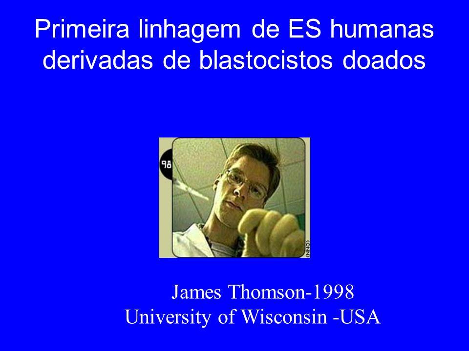 Primeira linhagem de ES humanas derivadas de blastocistos doados James Thomson-1998 University of Wisconsin -USA