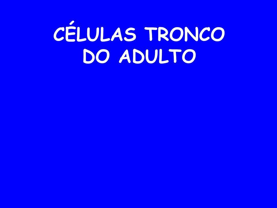 CÉLULAS TRONCO DO ADULTO