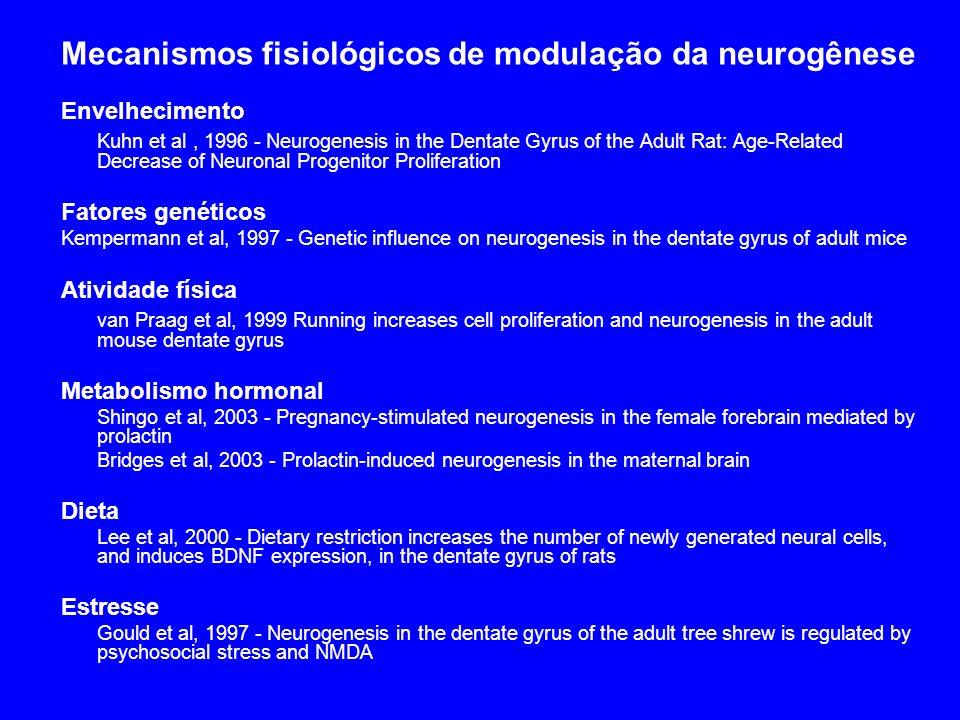 Mecanismos fisiológicos de modulação da neurogênese Envelhecimento Kuhn et al, 1996 - Neurogenesis in the Dentate Gyrus of the Adult Rat: Age-Related