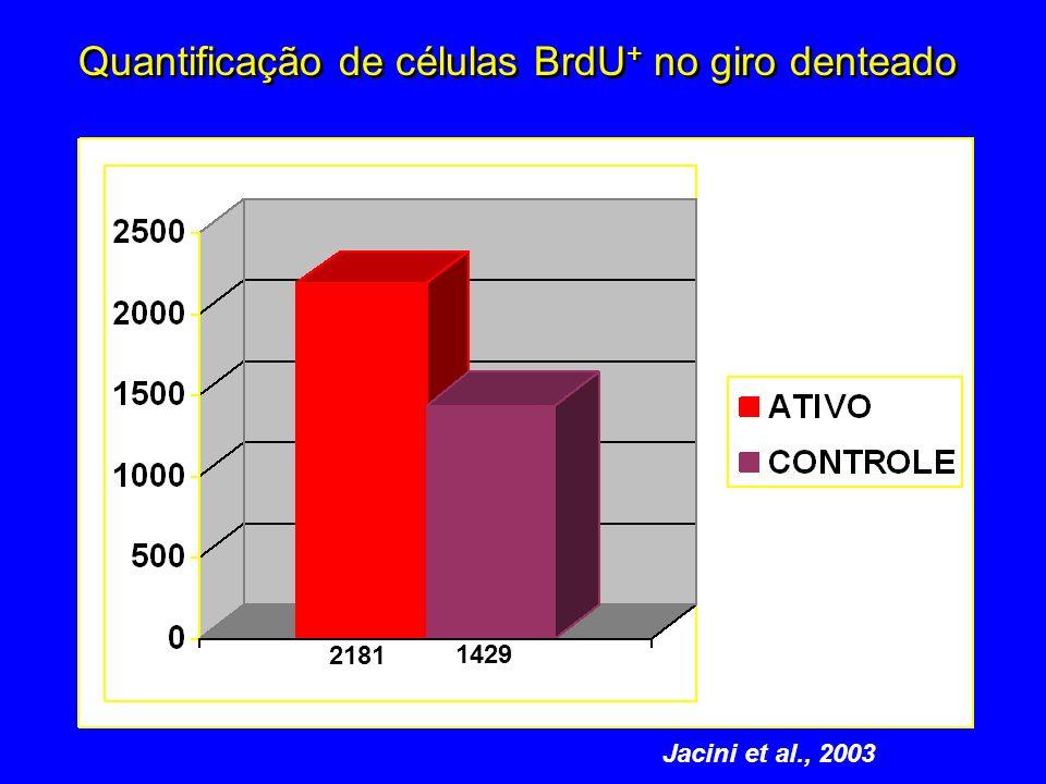1429 2181 Quantificação de células BrdU + no giro denteado Jacini et al., 2003