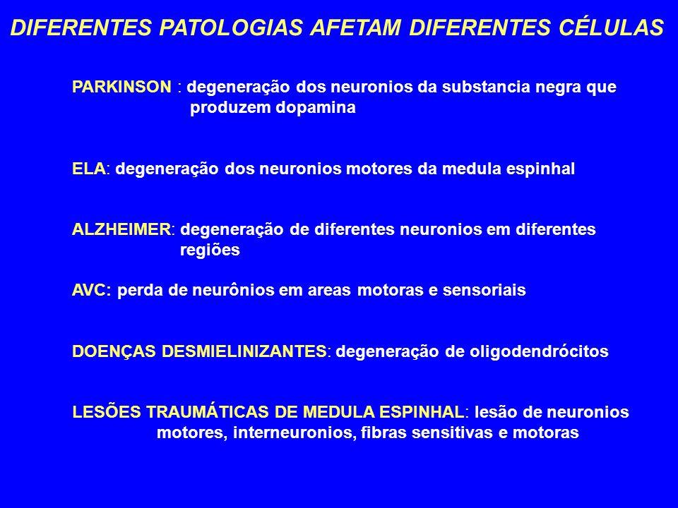 DIFERENTES PATOLOGIAS AFETAM DIFERENTES CÉLULAS PARKINSON : degeneração dos neuronios da substancia negra que produzem dopamina ELA: degeneração dos n