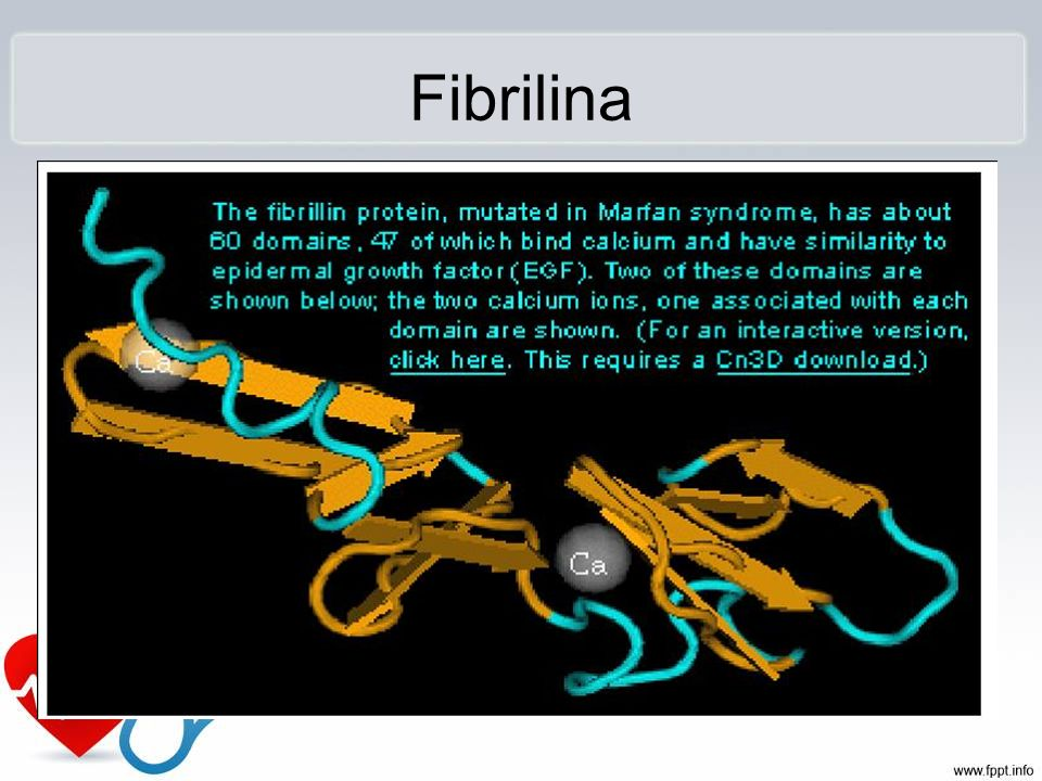 Fibrilina