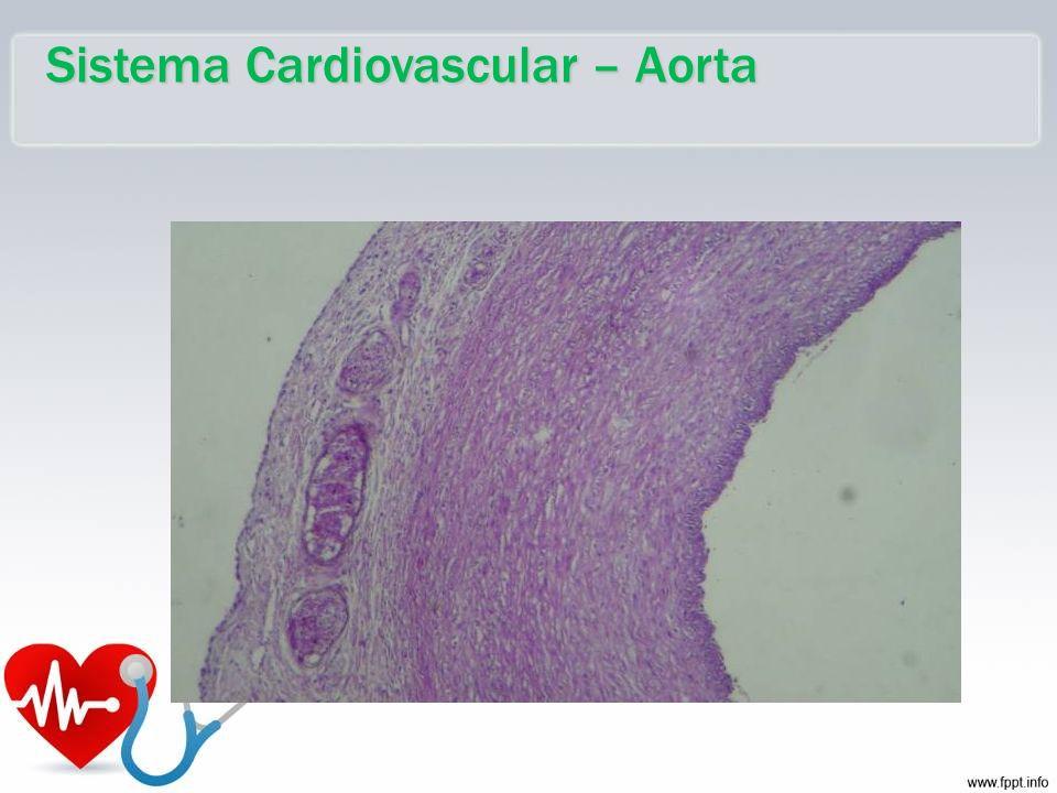 Sistema Cardiovascular – Aorta