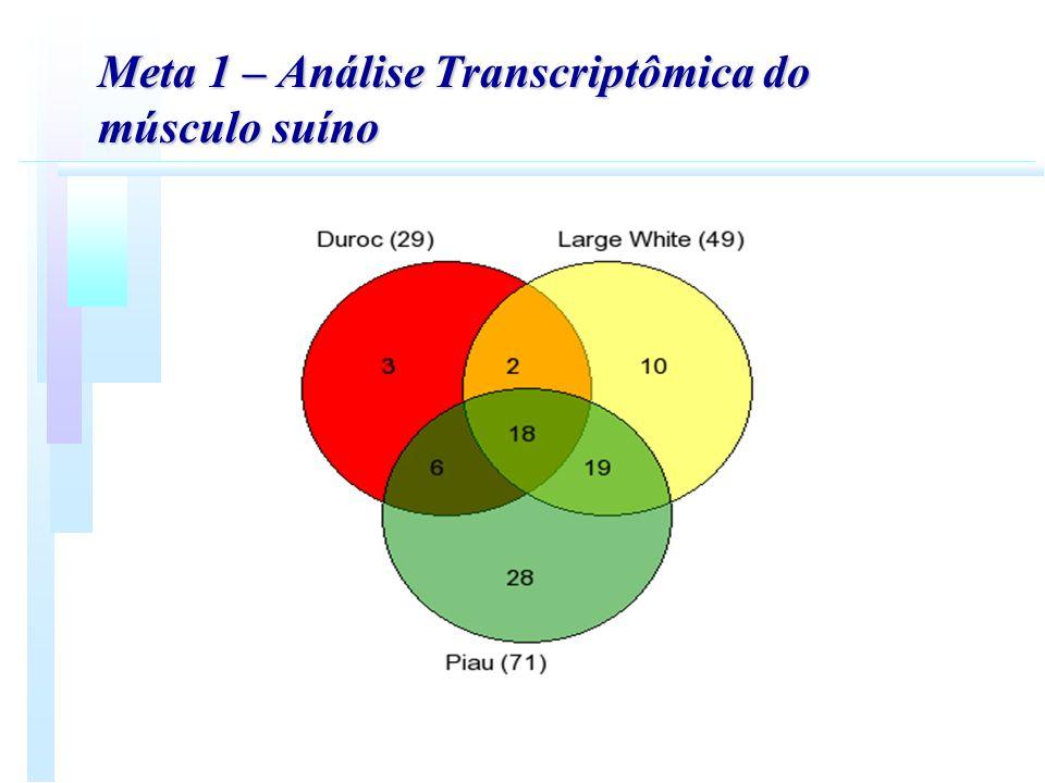 Meta 1 – Análise Transcriptômica do músculo suíno