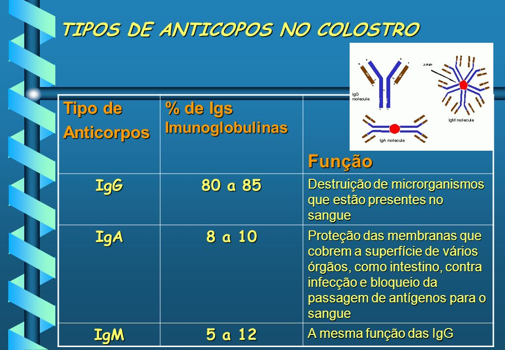 TIPOS DE ANTICOPOS NO COLOSTRO Tipo de Anticorpos % de Igs Imunoglobulinas Função IgG 80 a 85 Destruição de microrganismos que estão presentes no sang