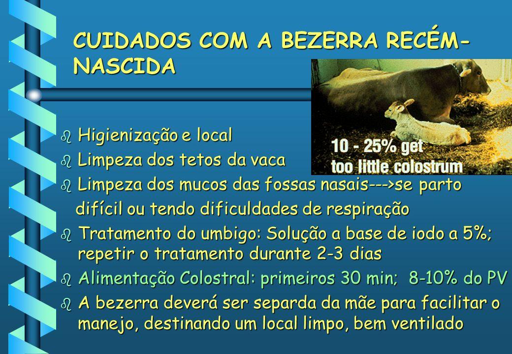 CUIDADOS COM A BEZERRA RECÉM- NASCIDA b Higienização e local b Limpeza dos tetos da vaca b Limpeza dos mucos das fossas nasais--->se parto difícil ou