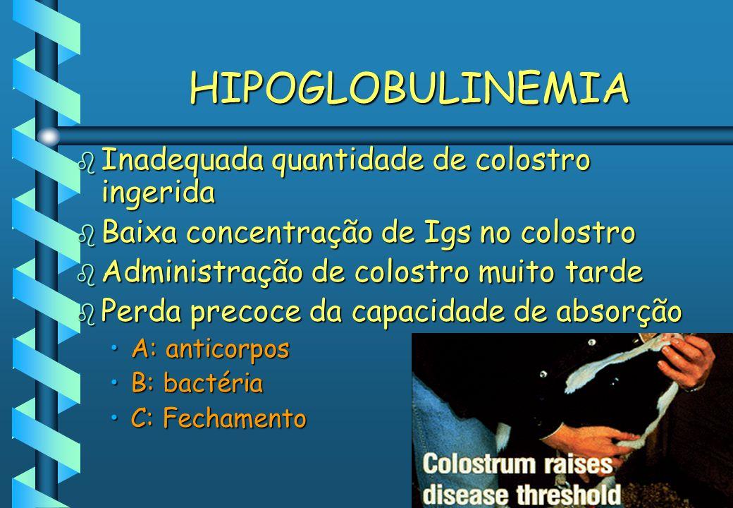 HIPOGLOBULINEMIA b Inadequada quantidade de colostro ingerida b Baixa concentração de Igs no colostro b Administração de colostro muito tarde b Perda