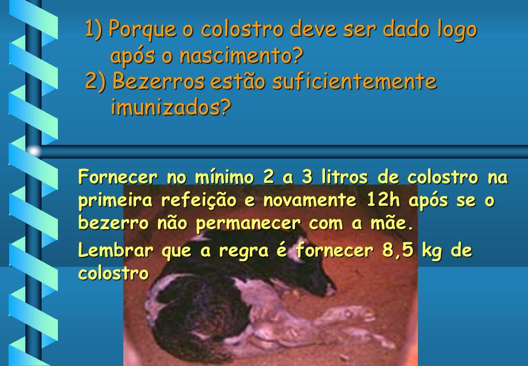 1) Porque o colostro deve ser dado logo após o nascimento? 2) Bezerros estão suficientemente imunizados? Fornecer no mínimo 2 a 3 litros de colostro n