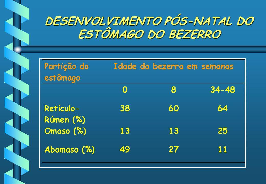 DESENVOLVIMENTO PÓS-NATAL DO ESTÔMAGO DO BEZERRO