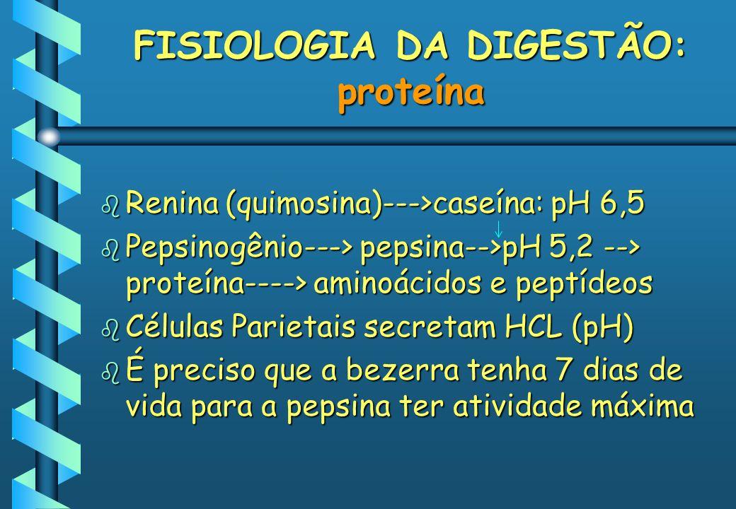 FISIOLOGIA DA DIGESTÃO: proteína b Renina (quimosina)--->caseína: pH 6,5 b Pepsinogênio---> pepsina-->pH 5,2 --> proteína----> aminoácidos e peptídeos