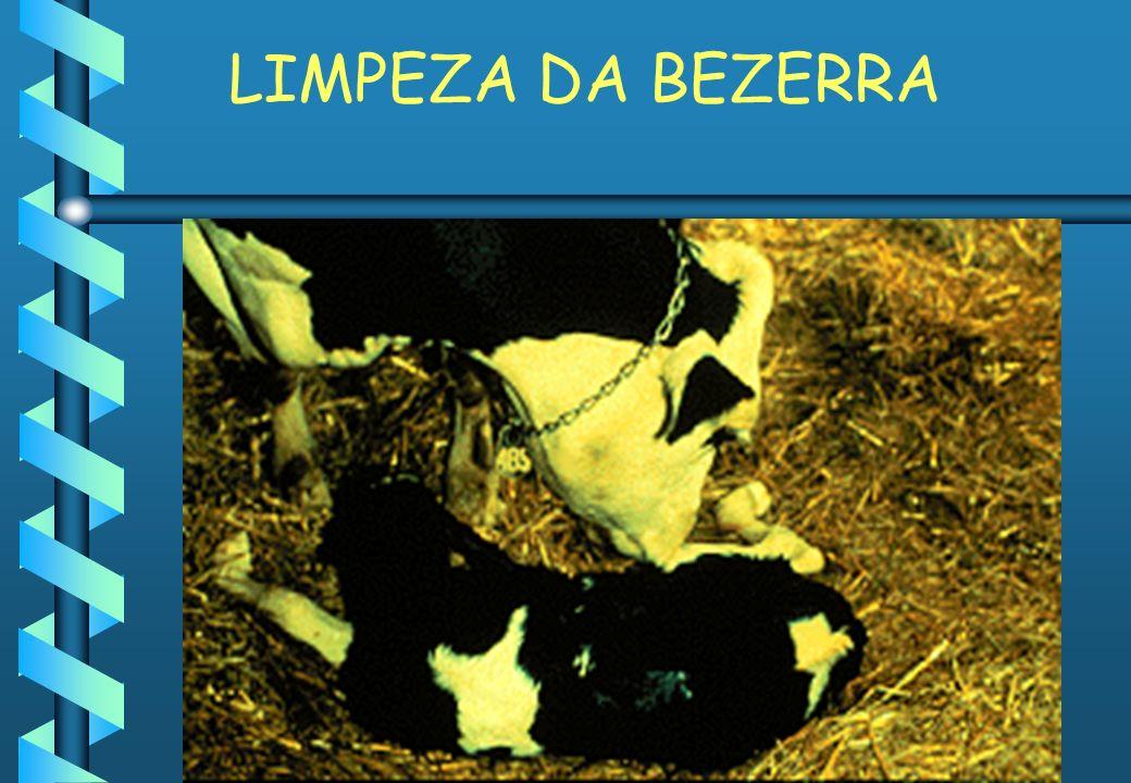 LIMPEZA DA BEZERRA