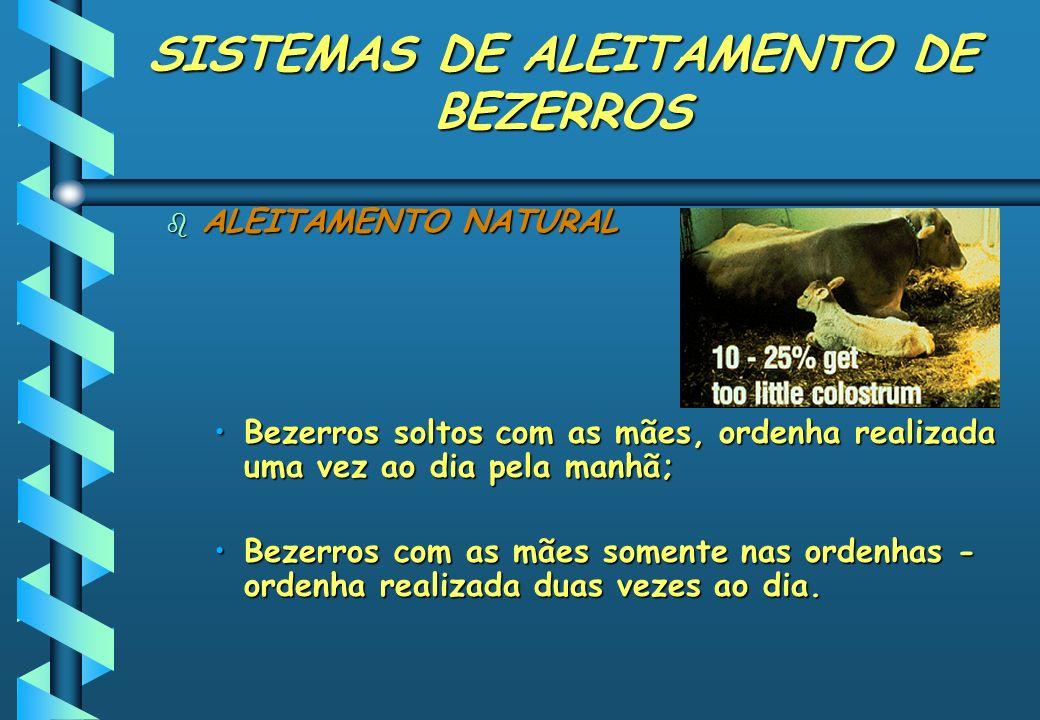 SISTEMAS DE ALEITAMENTO DE BEZERROS b ALEITAMENTO NATURAL Bezerros soltos com as mães, ordenha realizada uma vez ao dia pela manhã;Bezerros soltos com