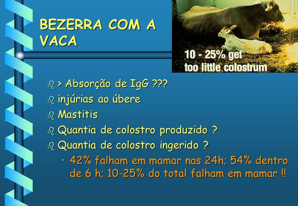 BEZERRA COM A VACA b > Absorção de IgG ??? b injúrias ao úbere b Mastitis b Quantia de colostro produzido ? b Quantia de colostro ingerido ? 42% falha
