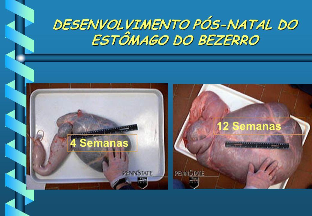 DESENVOLVIMENTO PÓS-NATAL DO ESTÔMAGO DO BEZERRO 4 Semanas 12 Semanas