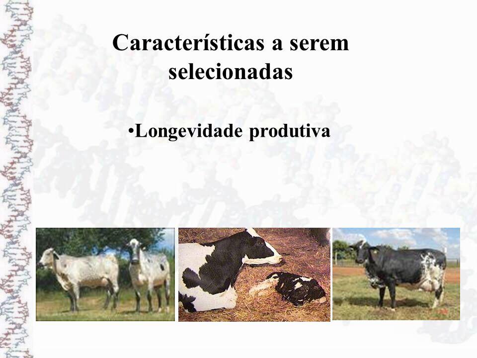 Características a serem selecionadas Longevidade produtiva