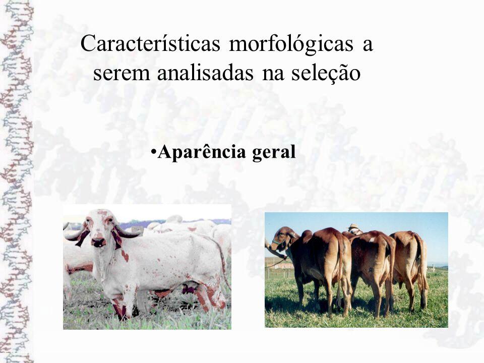 Características morfológicas a serem analisadas na seleção Aparência geral