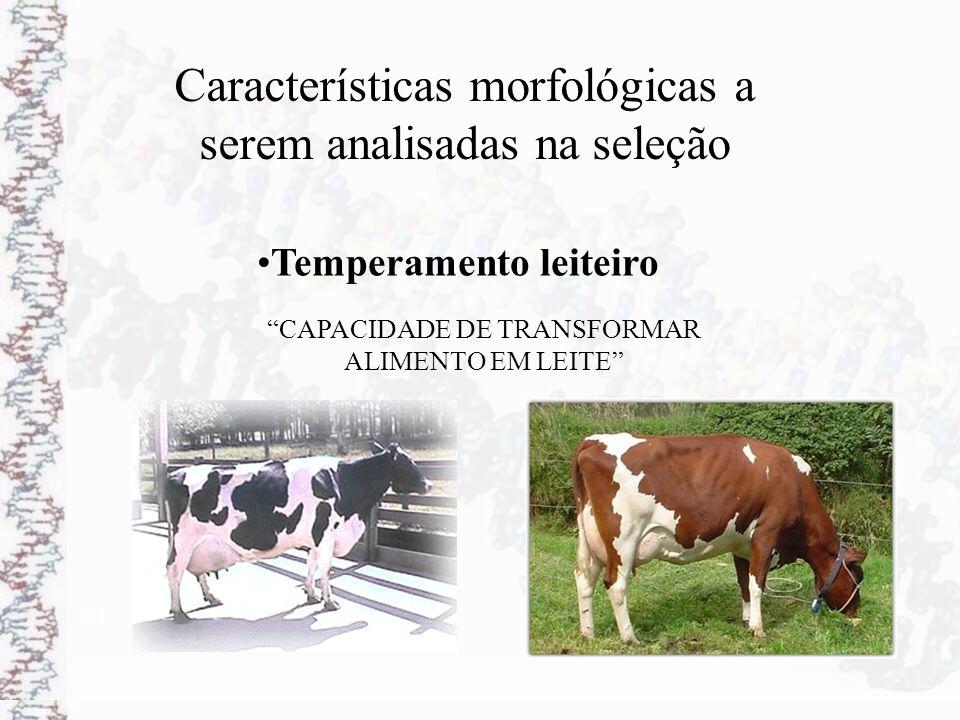 Características morfológicas a serem analisadas na seleção Temperamento leiteiro CAPACIDADE DE TRANSFORMAR ALIMENTO EM LEITE