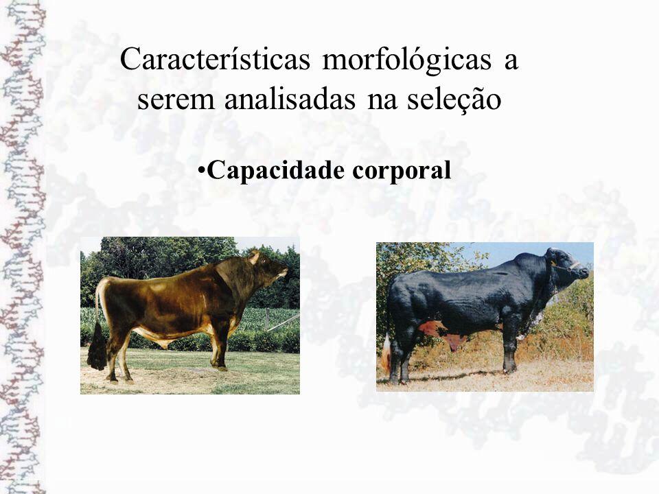 Características morfológicas a serem analisadas na seleção Capacidade corporal